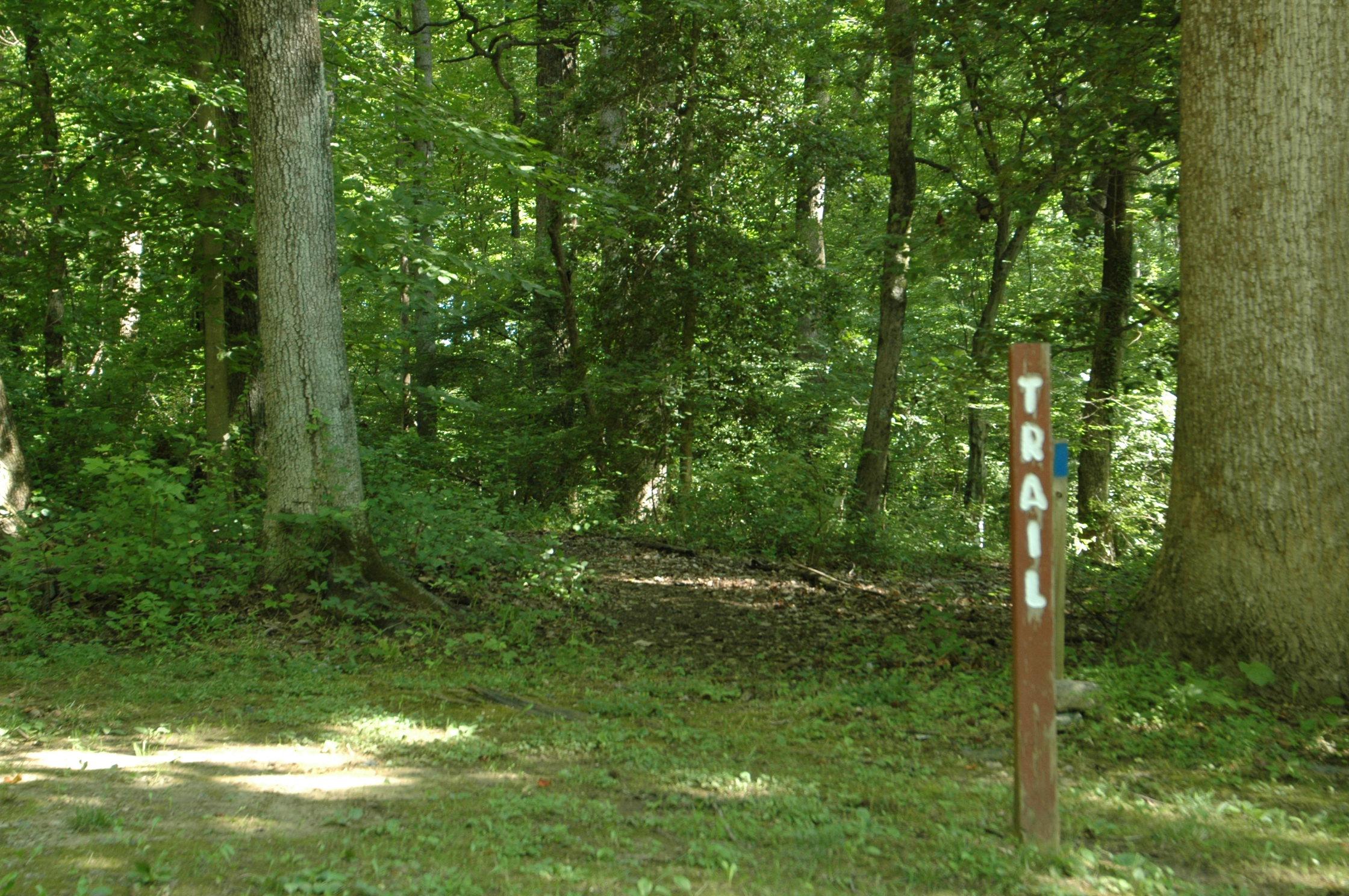 Pine Tree's hiking trail - trail head.