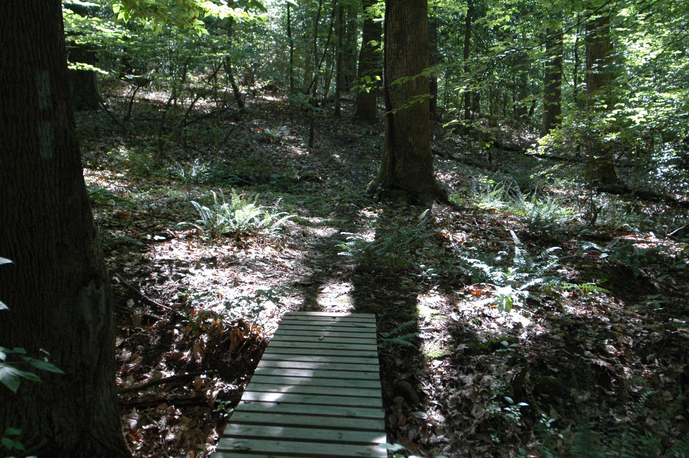 Pine Tree's hiking trail foot bridge.